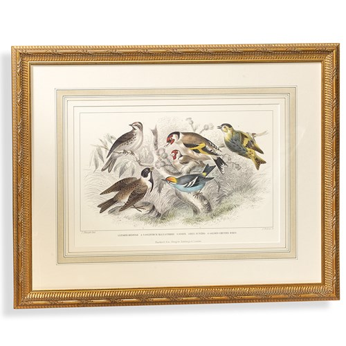 Bird Watercolor Engraving, Gold Finch, Bunting and Wrens