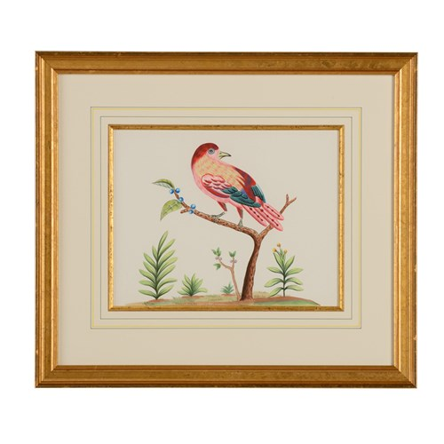 Bird Watercolor Painting, Pink Bird with Blue Berries