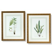 Curtis Ferns Lithographs