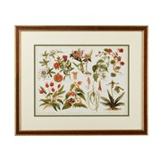 Tropical Botany Giclee