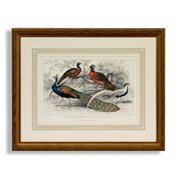Bird Watercolor Engravings