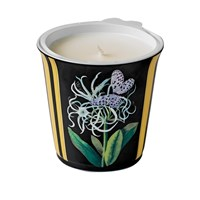 Bernardaud Natura Jonquille Tumbler with Scented Candle