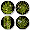 Wild Leaves Salad Plates, Set of 4