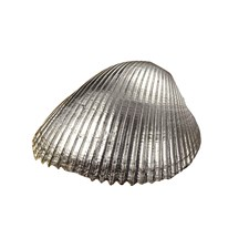 Sterling Plated Cockle Shell