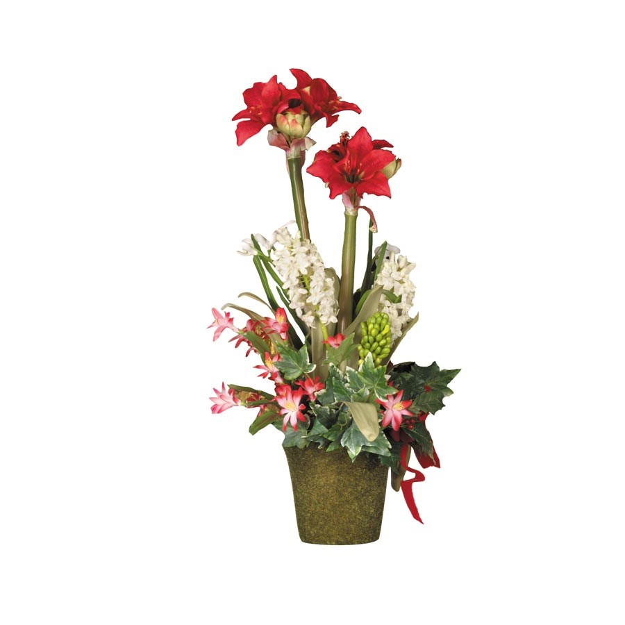 Christmas Amaryllis in Tall Square Pot. Hover to zoom