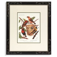 Cassell's Colorful Songbirds Print