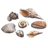 Silverplated Seashells